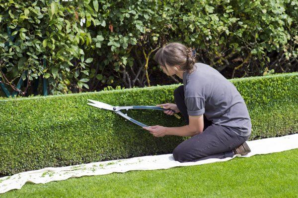 Comment bien choisir ses outils de jardin ?